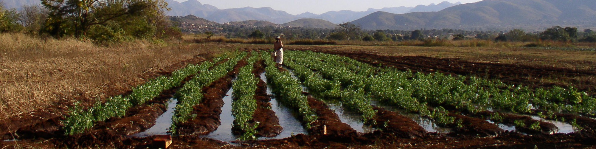Irrigated Field, Limpopo Basin, South Africa