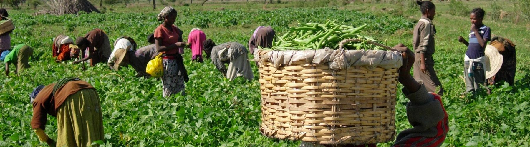 WEBINAR: The Fruits and Vegetable Value Chain In Ethiopia: Transformation, Prices, and Implications for Consumption and Nutrition